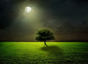 tree-at-night-picture-wallpapers