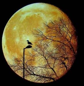maan-boom-vogel